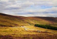 Härligt sceniskt berglandskap Wicklow bergnationalpark, ståndsmässiga Wicklow, Irland Arkivfoton
