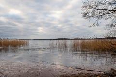 Härligt sceniskt stillsamt vinterlandskap av is, vatten och vassen mot en molnig himmel fotografering för bildbyråer