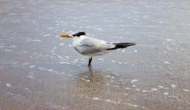 Härligt se för fågel Royaltyfria Bilder