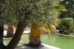 Härligt simbassängträd Arkivbild