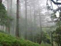 Härligt skoglandskap med dimmig envionment arkivbilder