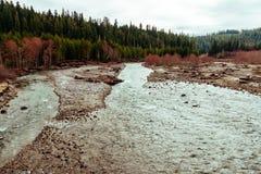 Härligt skott av en flod in med en stark ström i en skog fotografering för bildbyråer