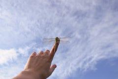 Härligt slut upp av en dragenfluga Royaltyfri Foto