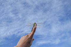 Härligt slut upp av en dragenfluga Royaltyfria Foton