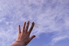 Härligt slut upp av en dragenfluga Arkivfoto