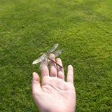 Härligt slut upp av en dragenfluga Royaltyfri Fotografi