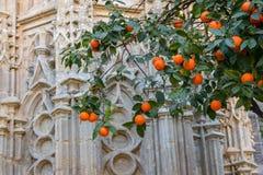 Härligt slut upp av Sevilla Cathedral carvings och orange träd royaltyfria bilder