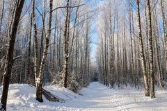 Härligt snöig vinterlandskap arkivbilder