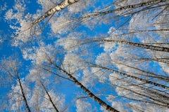 Härligt snöig vinterlandskap arkivfoto