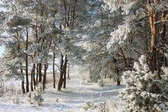 Härligt snöig vinterlandskap arkivbild