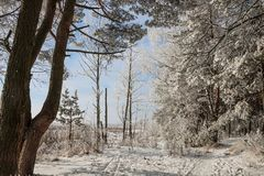 Härligt snöig vinterlandskap royaltyfria bilder