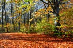 Härligt soligt skoglandskap med ett träd och skuggor på gräsmattan på en höstdag Arkivfoto