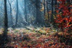 Härligt soligt skoglandskap med ett träd och skuggor på gräsmattan på en höstdag Royaltyfria Foton