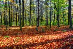 Härligt soligt skoglandskap med ett träd och skuggor på gräsmattan på en höstdag Arkivfoton