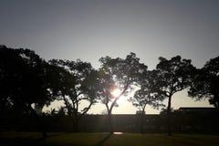 Härligt solljus, solnedgång i morgonen och trädsilhousette Arkivbilder