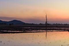 Härligt solnedgånglandskap för träd arkivfoton
