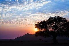 Härligt solnedgånglandskap, stort kronaträd och bergkontur på ljus himmel med blåa, purpurfärgade röda vita moln b för färger och royaltyfri fotografi