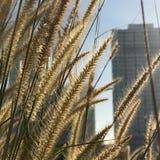 Härligt soluppgångögonblick i morgonen Fotografering för Bildbyråer