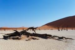 Härligt soluppgånglandskap av gömda döda Vlei Royaltyfri Bild