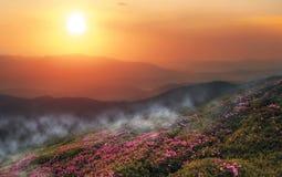 Härligt sommarlandskap, Europa berg, Europa lopp, skönhetvärld arkivfoto