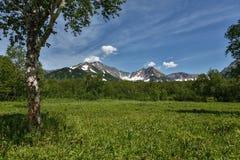 Härligt sommarlandskap med bergsikt Royaltyfria Bilder