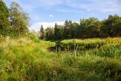 Härligt sommarlandskap med den lilla stillsamma floden Arkivfoton