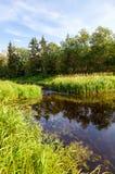 Härligt sommarlandskap med den lilla stillsamma floden Fotografering för Bildbyråer