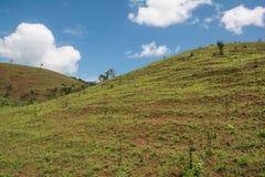 Härligt sommarlandskap med gräs för två berg Arkivfoton