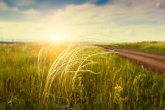 Härligt sommarlandskap med gräs i fältet på solnedgången royaltyfri bild