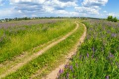 Härligt sommarlandskap med ljusa blommor och blå himmel Bygdväg till och med fältet med rosa och purpurfärgade lupines fotografering för bildbyråer