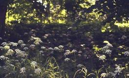 Härligt specifikt fotografi för sommarsäsong Sommarvegetation, blommar och planterar att täcka jordningen i en parkera/en äng/en  royaltyfria bilder