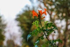 härligt steg blomma i himlen arkivfoton