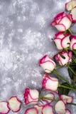 Härligt steg blommor på grå färgstentabellen blom- kant royaltyfri fotografi