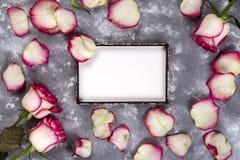Härligt steg blommor på grå färgstentabellen blom- kant royaltyfri foto