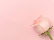 Härligt steg på en rosa bakgrund Royaltyfri Fotografi
