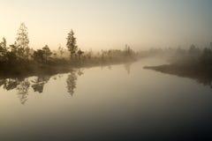 Härligt stillsamt landskap av den dimmiga träsksjön royaltyfri fotografi