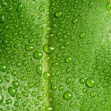 Härligt stort grönt blad med droppar av vatten Arkivfoto
