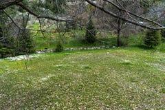 Härligt tillfångatagande av en naturlig trädgård arkivbild