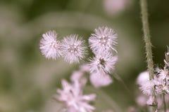 Härligt torka blommor i natur Royaltyfri Fotografi