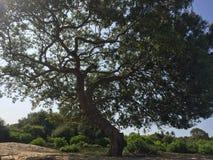 Härligt torka växten i Sri Lanka arkivfoto