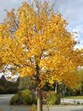 Härligt träd Royaltyfri Fotografi
