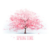 Härligt träd för körsbärsröd blomning Arkivfoton