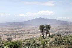 Härligt träd för montering Longonot och akacia Arkivfoton