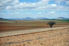 Härligt träd i den plogade jorden Arkivbild