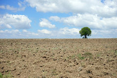 Härligt träd i den plogade jorden Arkivfoto