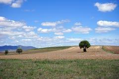 Härligt träd i den plogade jorden och berget Royaltyfri Foto