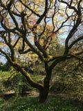 Härligt träd i en trädgård fotografering för bildbyråer