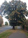 Härligt träd i höst Arkivfoton