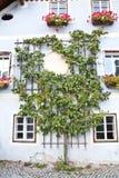 Härligt träd i Hallstatt Fotografering för Bildbyråer