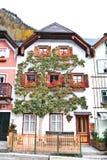 Härligt träd i Hallstatt Arkivbild